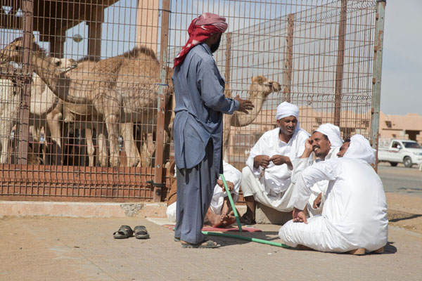Foto di Tradesmen waiting for customers and chatting at one of the many stalls with camelsAl Ain - Emirati Arabi Uniti