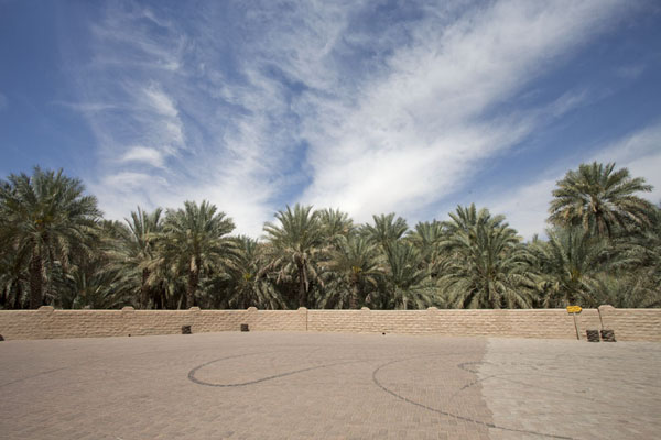 Small square with wall and date palm trees in the middle of the oasis | Al Ain oasis | United Arab Emirates