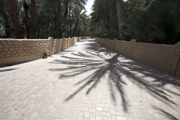 Alley in the oasis of Al Ain with shadows of date palm trees on the ground | Al Ain oasis | United Arab Emirates