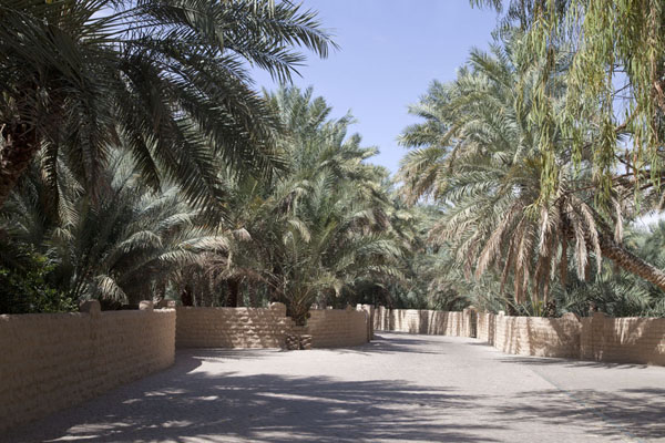 Wide walled street in the middle of the oasis | Al Ain oasis | United Arab Emirates
