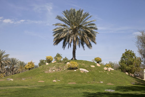 Photo de Hill with palm tree on topAl Ain - Emirats Arabes Unis