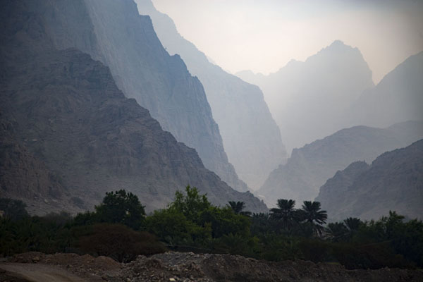 Foto van Canyon with mountains and trees at the foot of Jebel JaisJebel Jais - Verenigde Arabische Emiraten