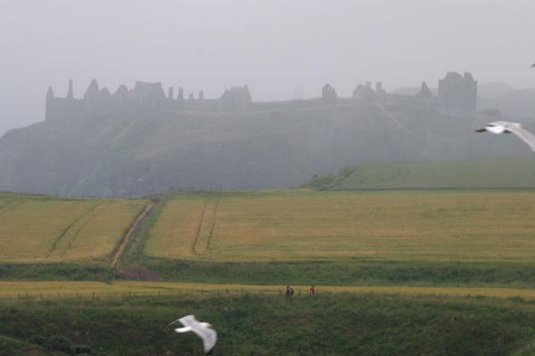 Picture of Contours of Dunnottar Castle, from a distance, with seagulls in the forefront