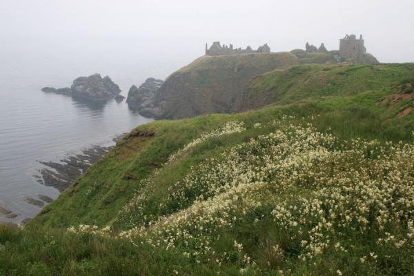 Picture of Dunnottar Castle, cliffs, flowers and sea