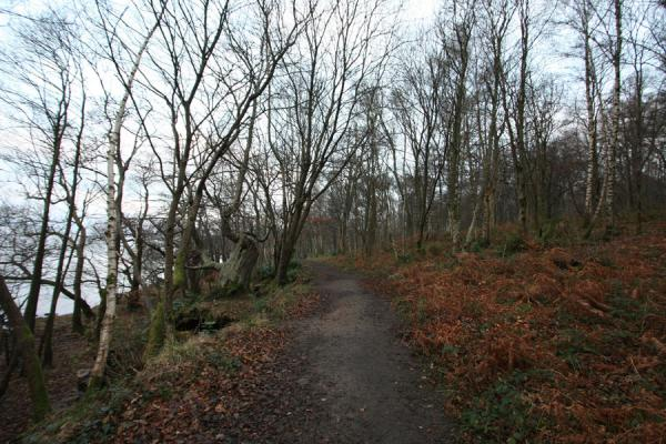 Foto van Path leading through Balloch Castle Country ParkBalloch - Verenigd Koninkrijk