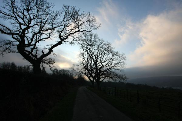 Photo de Tree and country road on the shore of Loch LomondBalloch - le Royaume-Uni