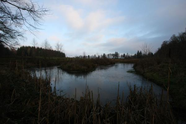 Photo de Frozen pond close to Loch LomondBalloch - le Royaume-Uni