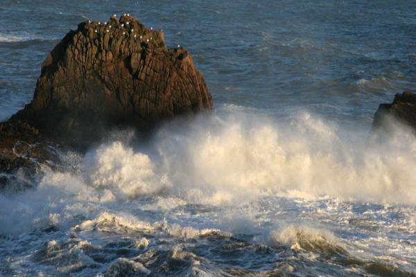 Picture of Slains Castle (United Kingdom): Crashing wave against a rock with seagulls just below Slains Castle
