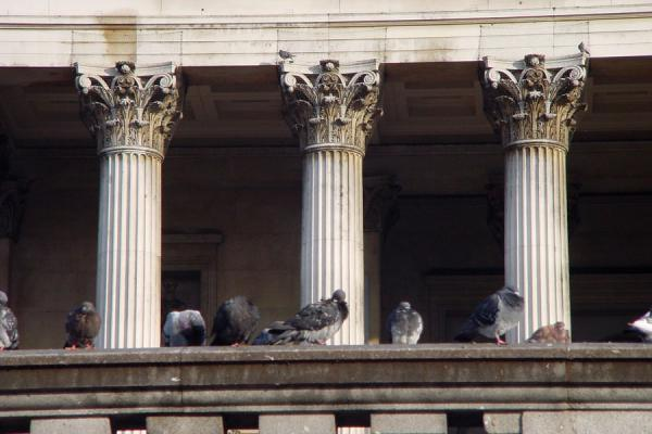 Picture of Trafalgar Square (United Kingdom): Pigeons near National Gallery - Trafalgar square