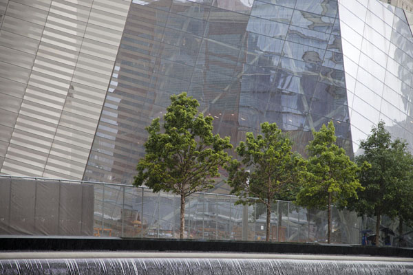 Line of trees with the museum in the background | 9/11 Memorial | U.S.A.