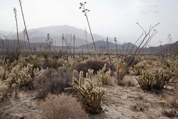 Picture of Anza-Borrego Desert State Park (U.S.A.): Dry vegetation at the Pictograph trail