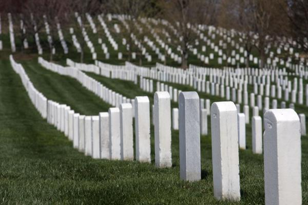 Picture of Well-organized rows of tombstones at Arlington National Cemetery