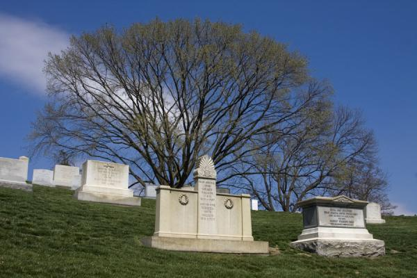 Tombstones with tree on a hill of Arlington National Cemetery | Arlington National Cemetery | U.S.A.