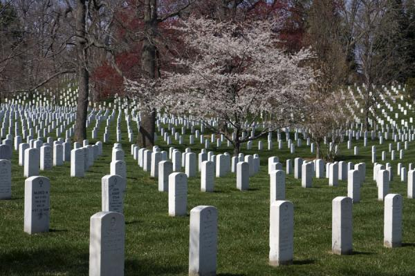Field with tombstones and trees at Arlington National Cemetery | Arlington National Cemetery | U.S.A.