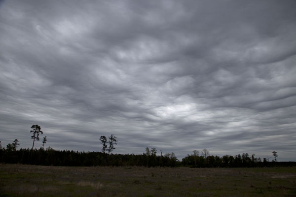 Cloudy sky over the plains in the Sandy Creek Corridor | Big Thicket National Preserve | U.S.A.