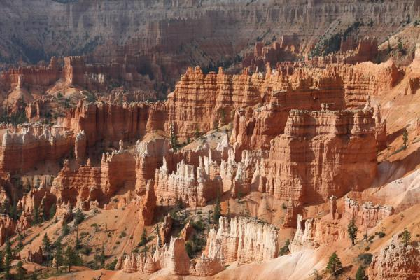 Picture of Early sunlight on Bryce Canyon