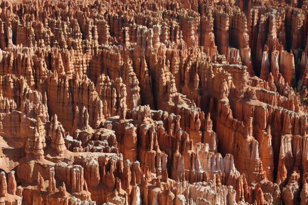 Close-up of hoodoos at Bryce Canyon | Bryce Canyon National Park | U.S.A.