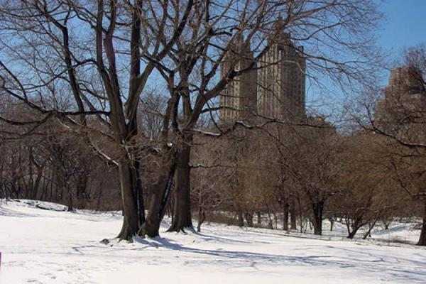 Picture of Snowy Central Park New York