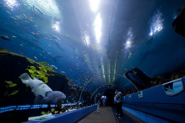 Photo de Tunnel through the Ocean Voyager tank - les Etats-Unis - Amérique