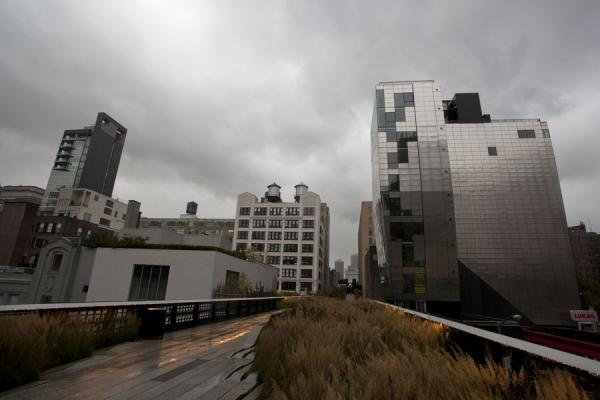 Picture of High Line (U.S.A.): Bushes on the High Line with modern architecture on both sides