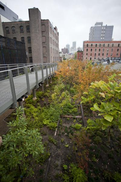 Picture of High Line (U.S.A.): Trees on the old railroad tracks surrounded by buildings on the High Line