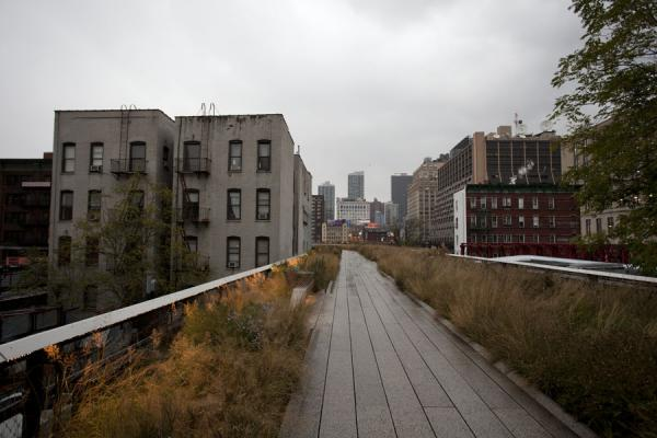 Picture of High Line (U.S.A.): Cutting through buildings: the High Line with bushes at the north end