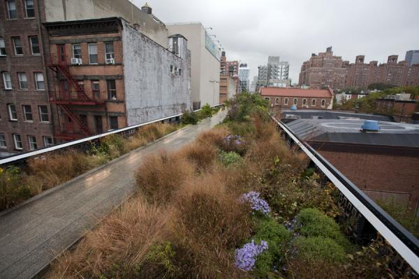 Flowers and plants with the greenway running north-south in west Manhattan | High Line | les Etats-Unis