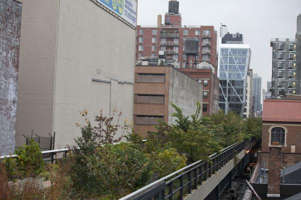The High Line running right in the middle of buildings with vegetation | High Line | les Etats-Unis