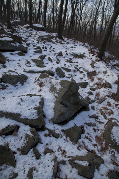Snowy ground in the forest on Breakneck Ridge Trail | Hudson Highlands | U.S.A.