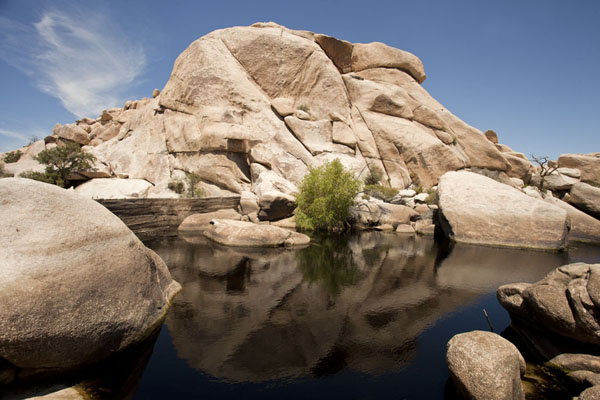 Rock formation reflected in a rare water reservoir at Barker Dam | Parco Nazionale del Joshua Tree | Stati Uniti