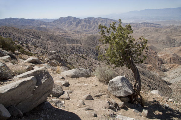 View from Keys View towards the east | Joshua Tree National Park | Verenigde Staten