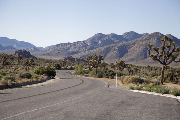 Park Boulevard runs from the West Entrance to the central area of Joshua Tree National Park | Joshua Tree National Park | Verenigde Staten
