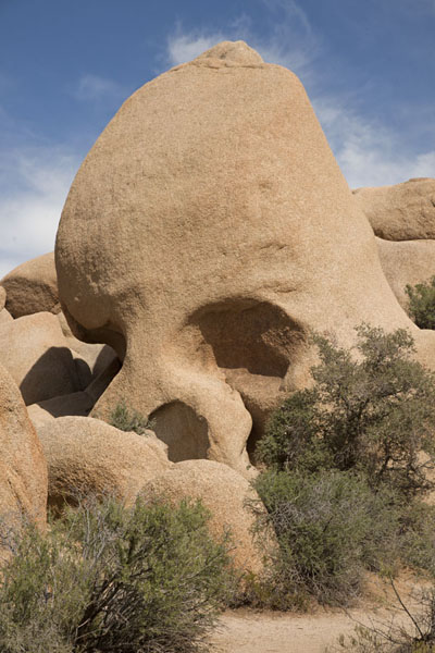 Skull Rock, the most clearly defined rock in the park | Joshua Tree National Park | Verenigde Staten