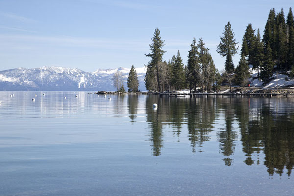 Trees reflected in the quiet waters of Lake Tahoe | Lake Tahoe | United States