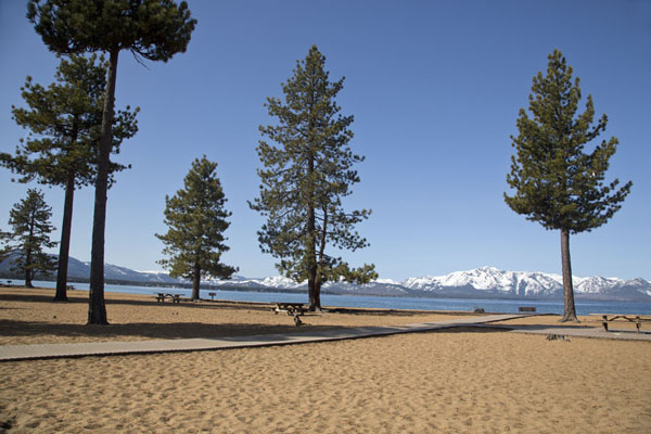 Foto van Trees on Nevada beach on the east side of Lake TahoeLake Tahoe - Verenigde Staten