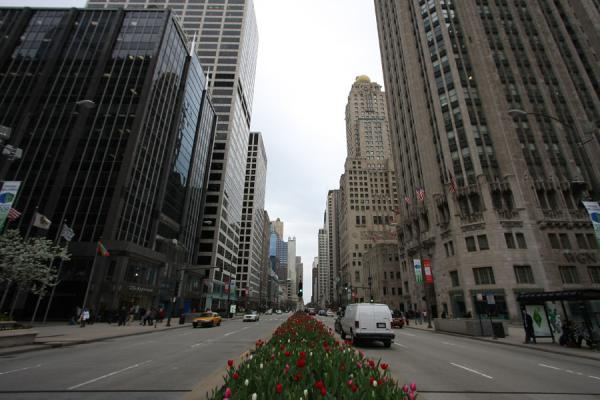 Michigan Avenue with tulips, looking north | Magnificent Mile | U.S.A.