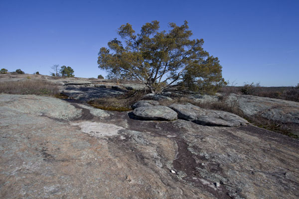 Picture of Mount Arabia Nature Preserve (U.S.A.): Tree on the rocky surface of Mount Arabia