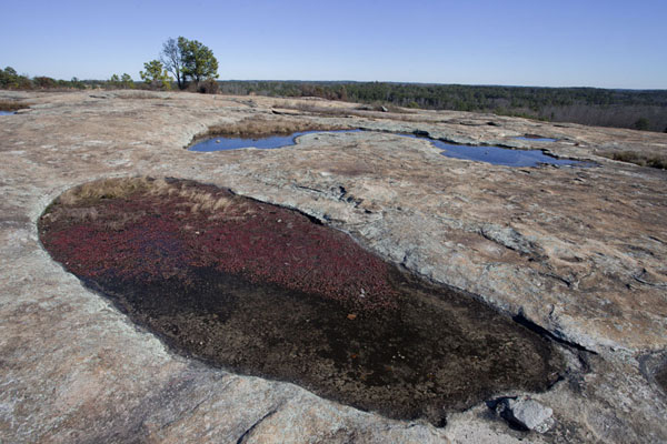 The surface of Mount Arabia is full of small pits filled with plants or water | Mount Arabia Nature Preserve | U.S.A.