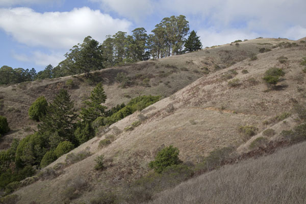 Hills above Muir Woods | Muir Woods National Monument | U.S.A.