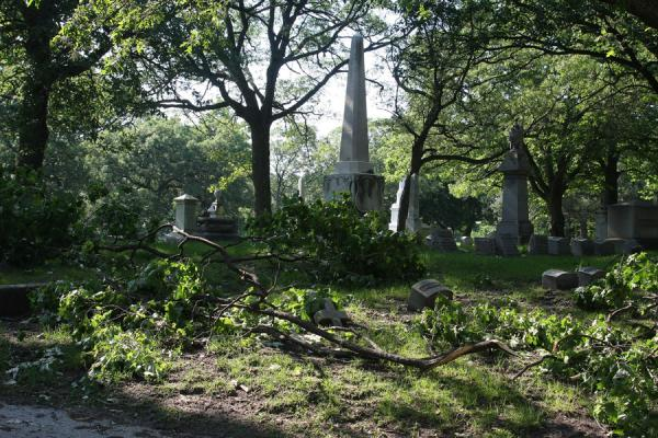 Picture of Rosehill Cemetery (U.S.A.): Branches of trees on the ground of Rosehill Cemetery