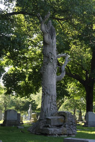 Picture of Rosehill Cemetery (U.S.A.): Tree and train in Rosehill Cemetery