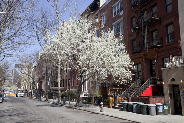 Foto van Street view of St Marks Place with blossoming treesSaint Marks Place - Verenigde Staten
