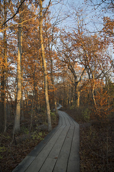 Foto de The wooden boardwalk leading to Kickapoo CanyonStarved Rock - Estados Unidos