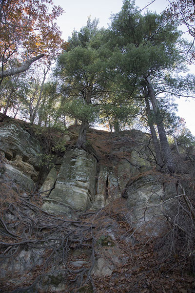 Foto van Trees with roots enveloping the rocks belowStarved Rock - Verenigde Staten