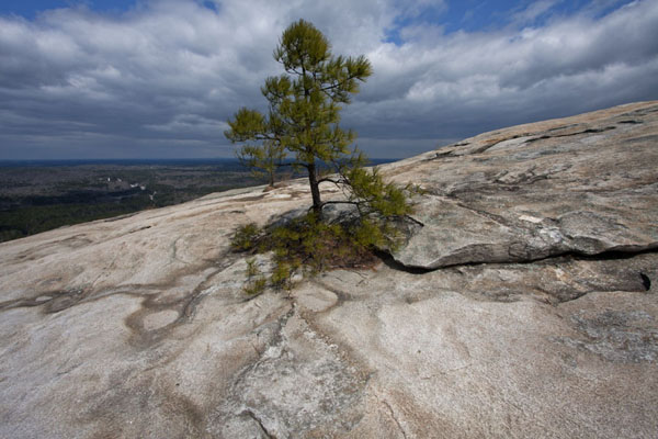 Lonely tree on Stone Moutain | Atlanta | 美国