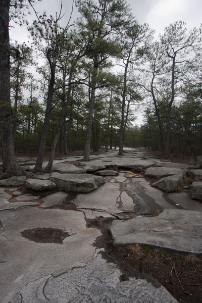 Trail through the forest and over the rocky surface of Stone Mountain | Stone Mountain | United States