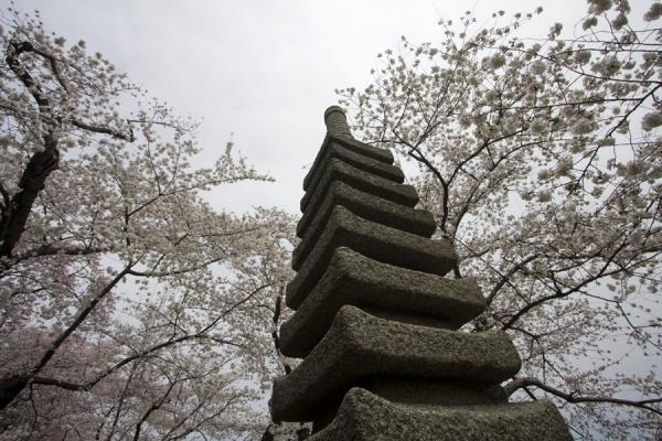 Picture of Japanese stone pagoda and cherry blossoms