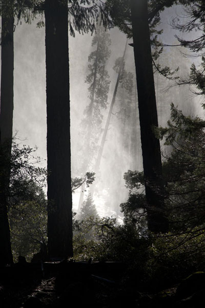 Foto van Mist from Nevada Falls making the forest below look mysteriousYosemite - Verenigde Staten