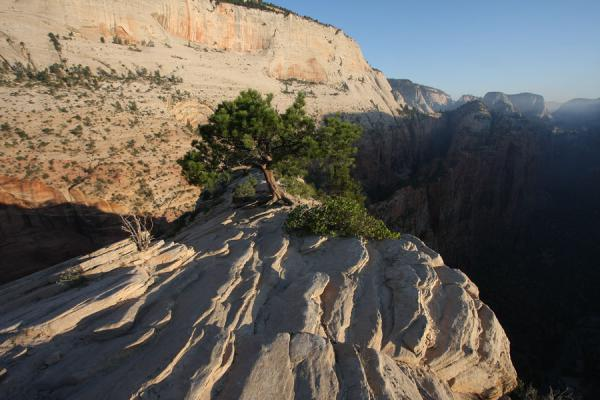 Picture of Zion National Park (U.S.A.): Rough rocky surface and tree near the top of Angels Landing