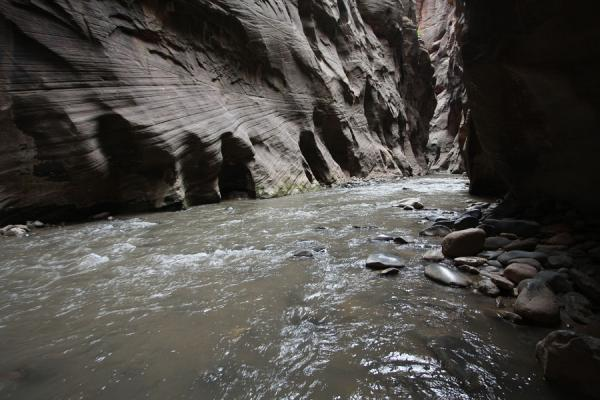 Virgin River cutting through a narrow stretch of canyon | Zion National Park | U.S.A.